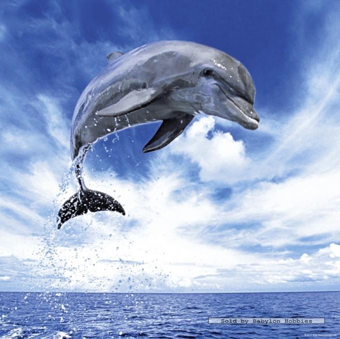 Pin Dolfijn Dieren Kleurplaten Print Een Mooie Kleurplaat